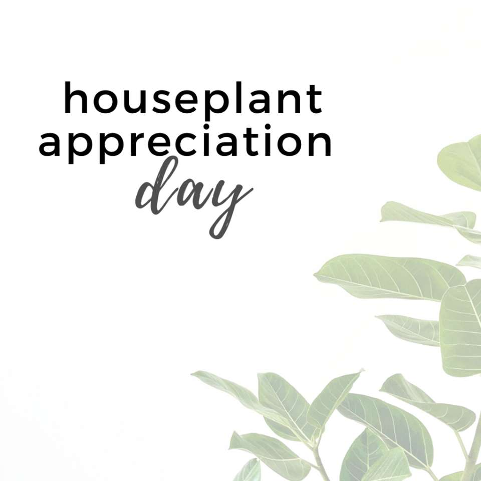 National Houseplant Appreciation Day Wishes for Whatsapp