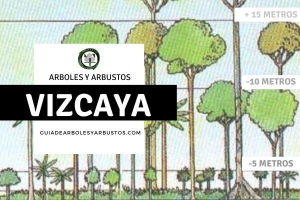 Arboles y arbustos de la provincia de Vizcaya