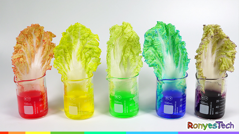 The Color Changing Chinese Cabbage Experiment Instruction Step3