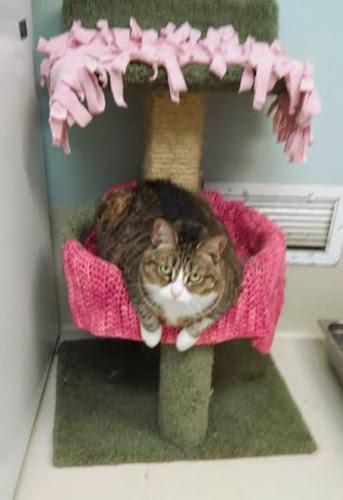 Tabby's Place Cat Sanctuary
