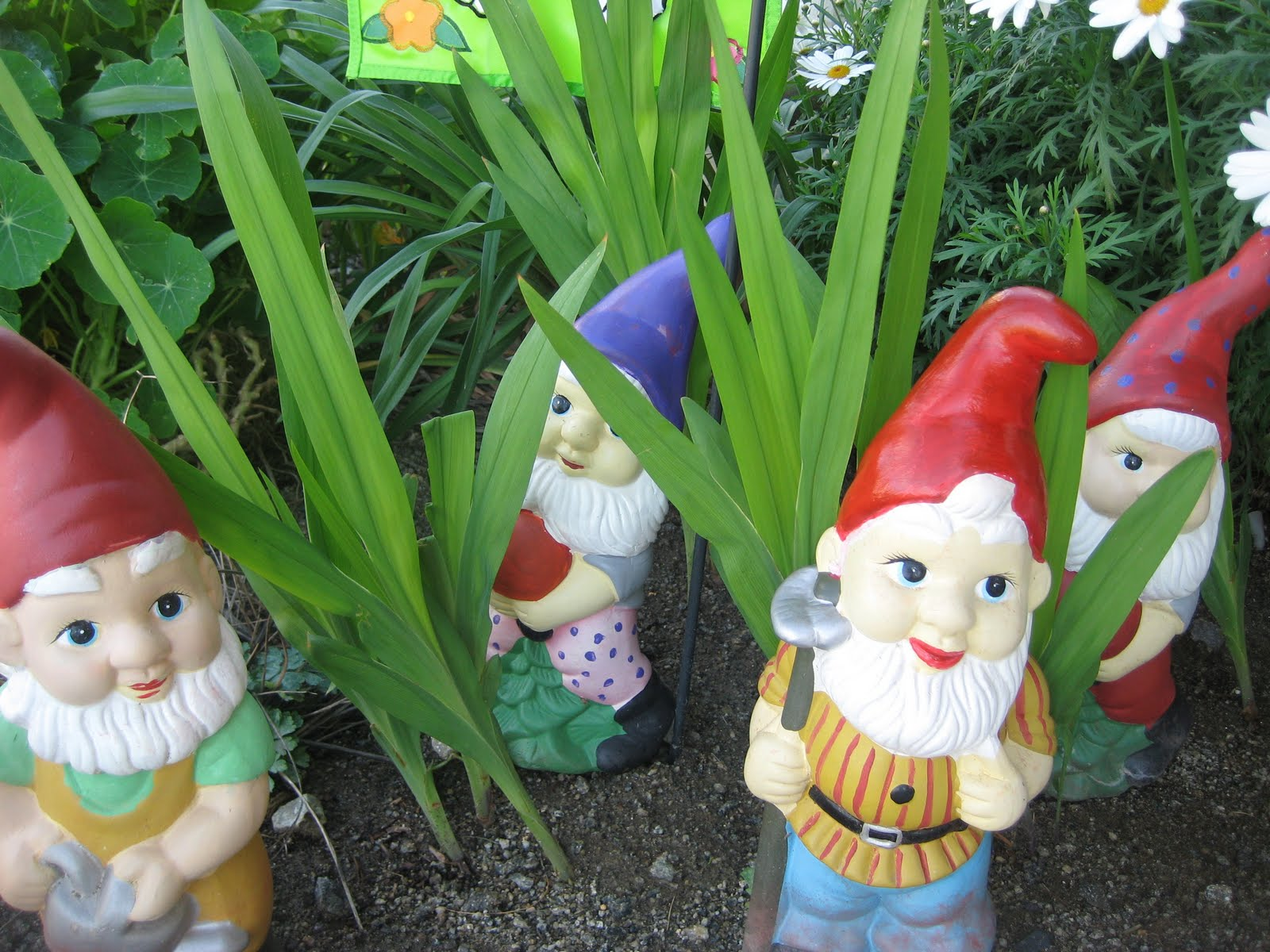 Gnome Garden: 52andNew: Week 7 -- Gussyin' Up Our Garden Gnomes