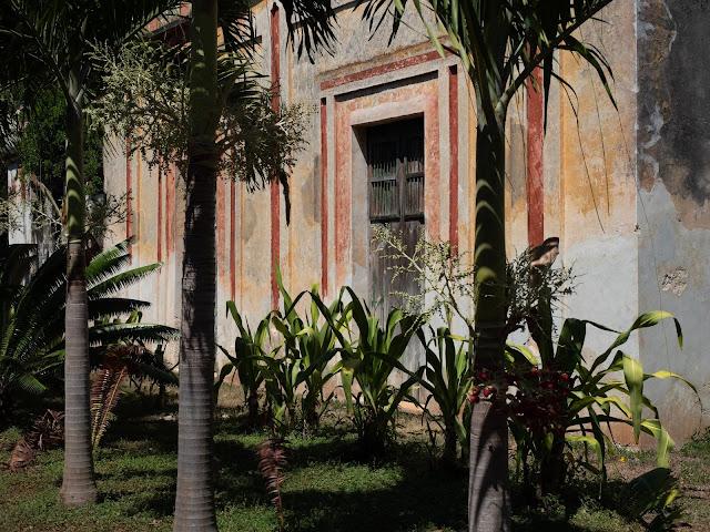 Ventana entre palmeras en el jardín de la hacienda Yaxcopoil