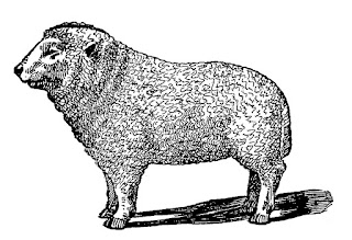 lamb animal illustration digital clip art download
