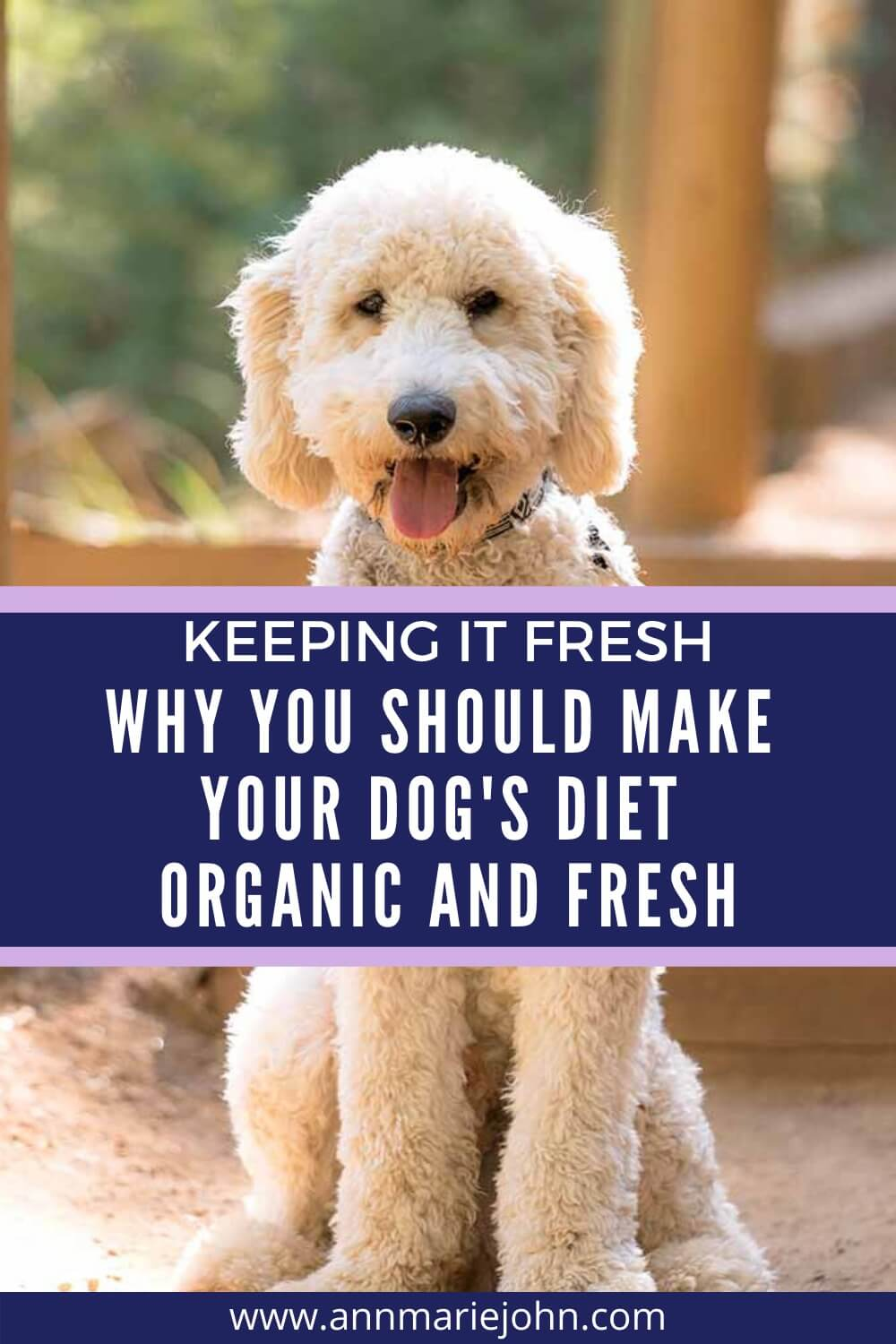 Keeping It Fresh: Why You Should Make Your Dog's Diet Organic and Fresh
