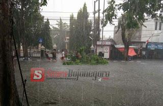Akibat Hujan Deras Disertai Angin Akibatkan Ranting Pohon Tumbang