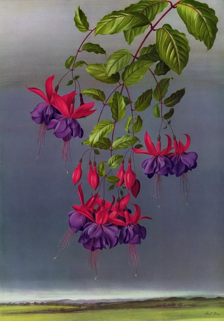 Paul Jones. Акварельные рисунки цветов 45