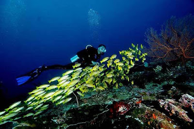 perbedaan snorkeling vs diving
