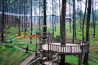 Permainan Di Orchid Forest