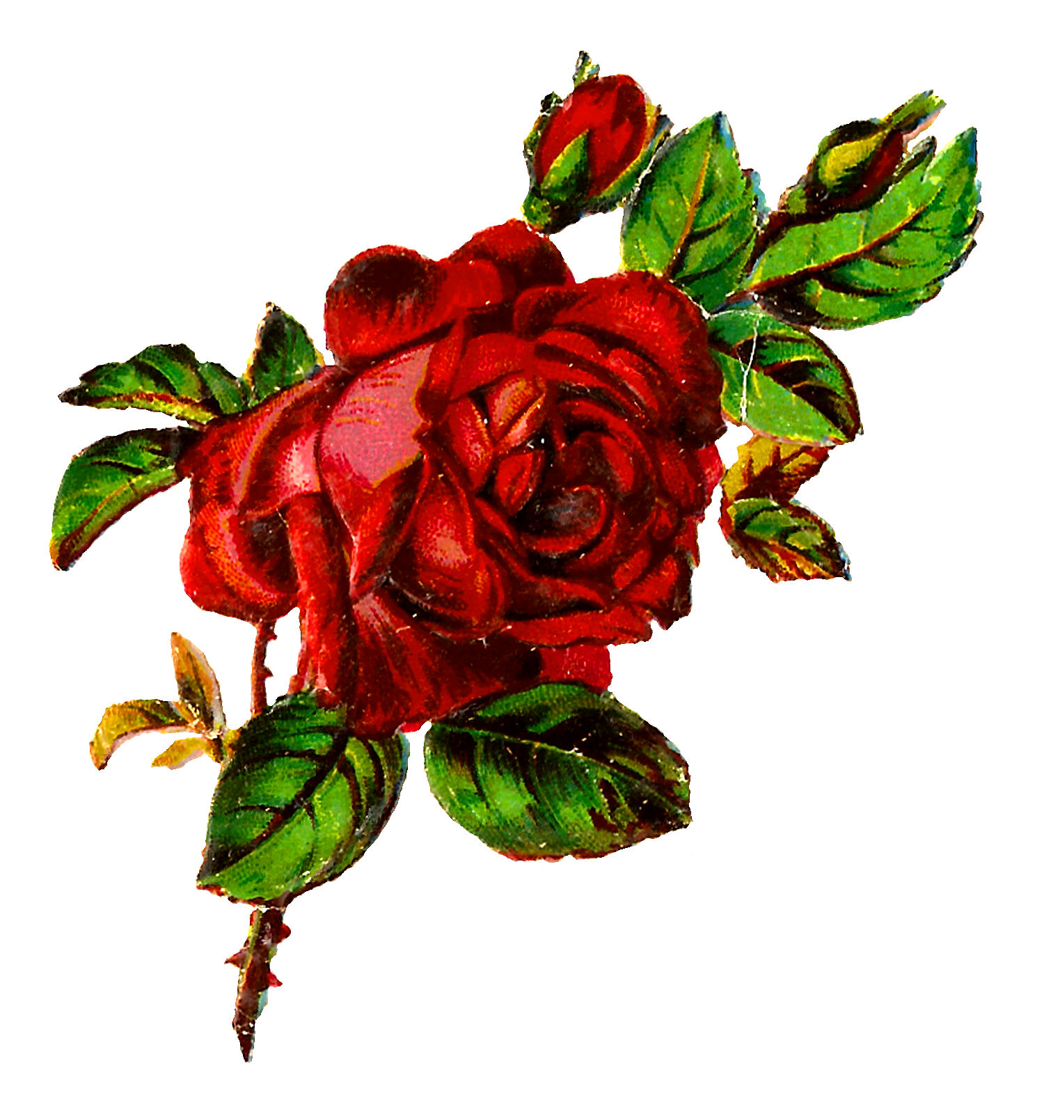 Antique Images: Free Shabby Chic Red Rose Image Grunge ...