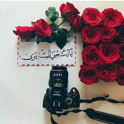 صور ورد احمر مع كاميرا وكلمات جميلة