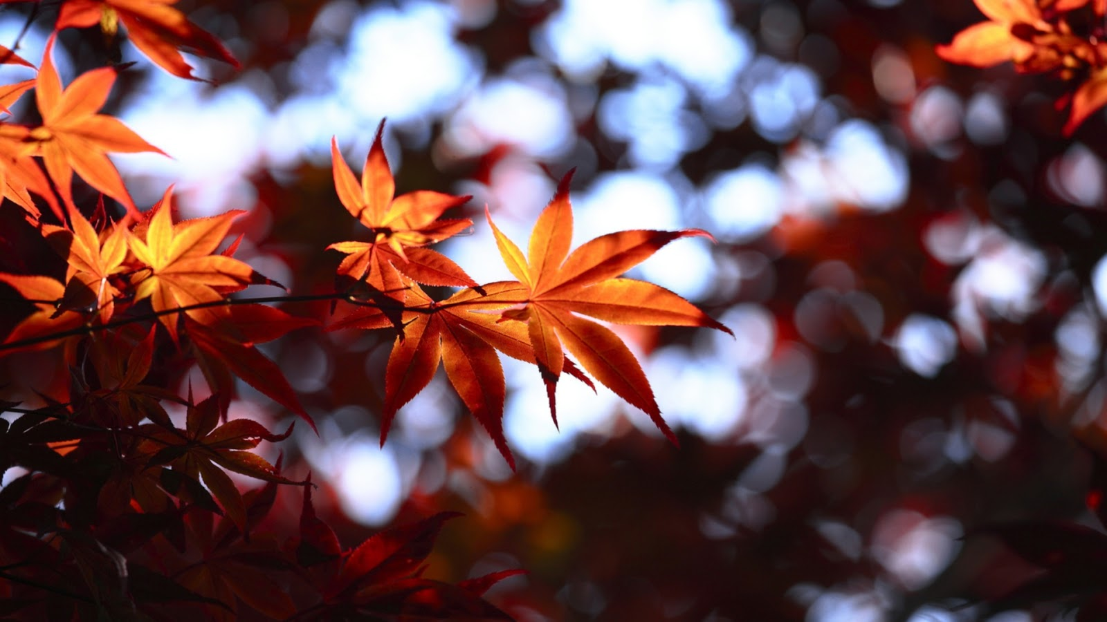 Labels Red Autumn Leaves Photography Hd Wallpapers For: Mystery Wallpaper