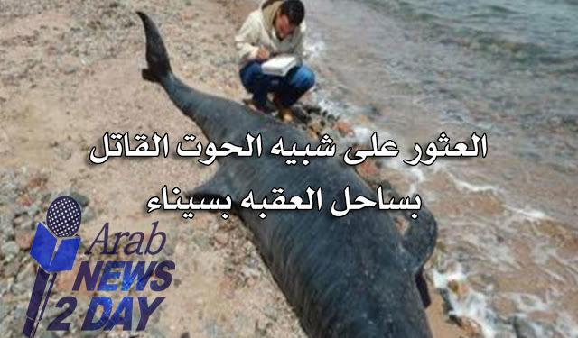 العثور على شبيه الحوت القاتل  بساحل العقبه بسيناء ... شاهد الان من هنا