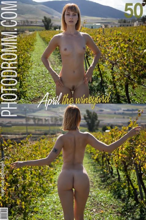 1631347728_001 [PhotoDromm] April - The WineYard
