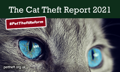 Picture of a grey cat with blue eyes on which the words The Cat Theft Report 2021 are written