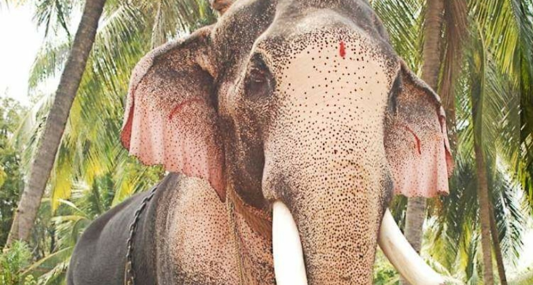 Thechikkottukavu will move to ban Ramachandran in the puras,www.thekeralatimes.com