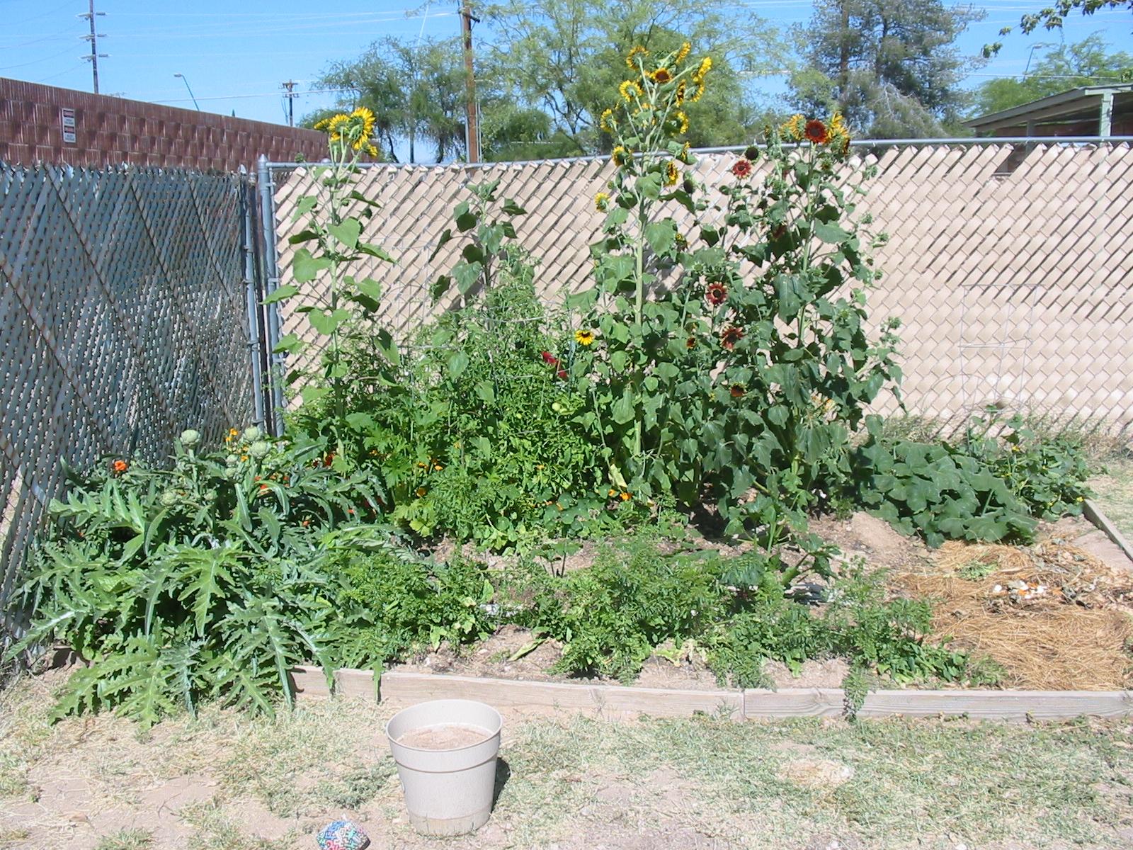 Tucson Gardening Best Orientation For Raised Bed Garden
