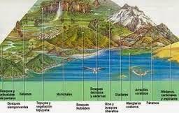 Los Ecosistema Estructura