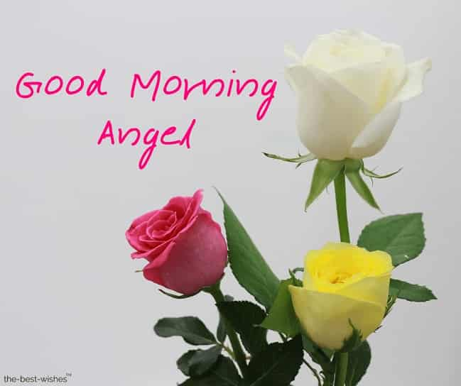 good morning angel images with roses
