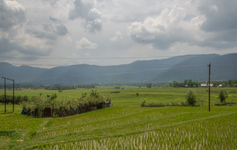 Rice fields with mountains in background present heavenly beautiful scene
