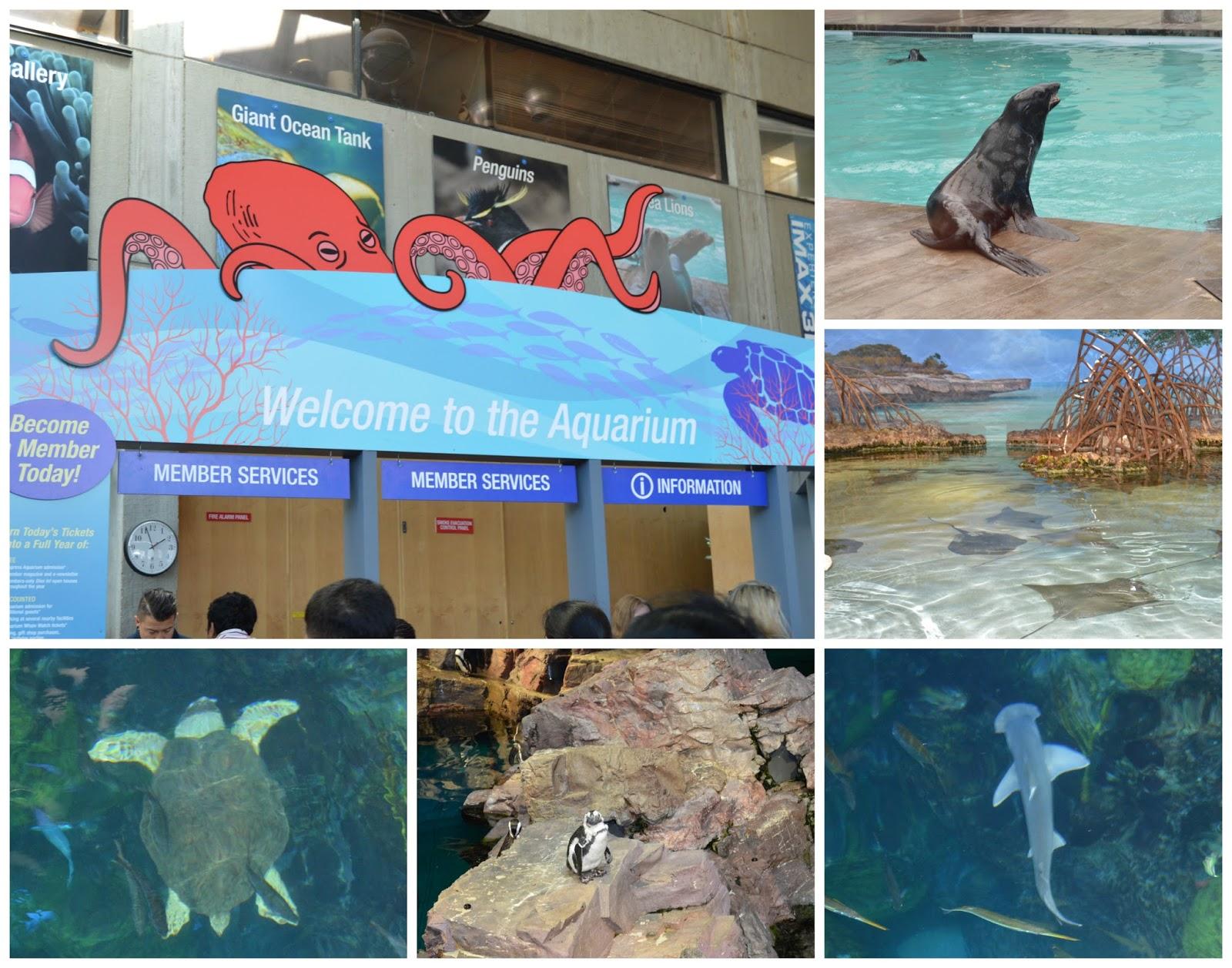 Touring boston with the citypass martinis bikinis New england aquarium tickets