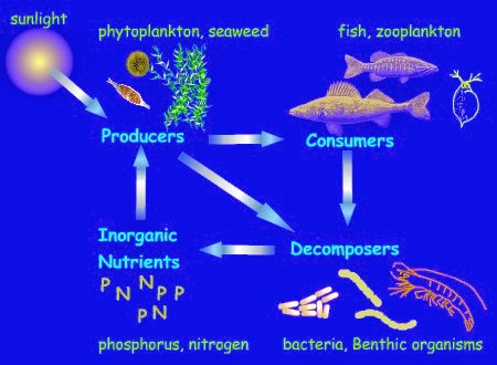 Mr. Duda - Food Web Science Project - JEMS Library Media ...  Crappie Lake Food Chain