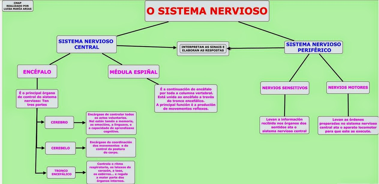 Moderno órganos Del Sistema Nervioso Y Las Funciones Motivo ...