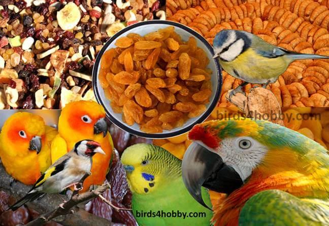 الفواكه المجففة فوائد ها و كيف تقدم للطيور dried fruits
