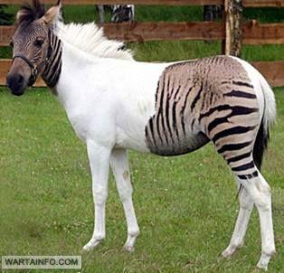 15 Hewan Berwarna Putih Yang Langka Dan Unik Wartainfo Com