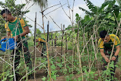 Prajurit Pamtas RI-PNG Yonif 411 Manfaatkan Lahan Kosong Menjadi Kebun Sayur