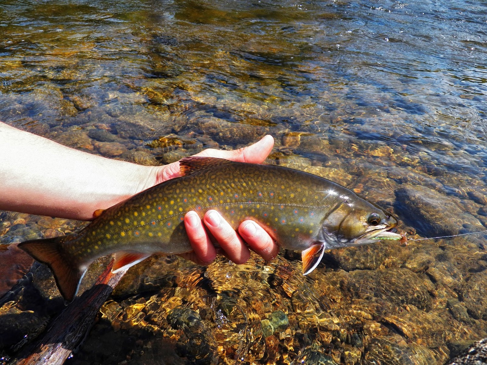 Connecticut fly angler last few hours in maine three of for Best trout fishing in ct