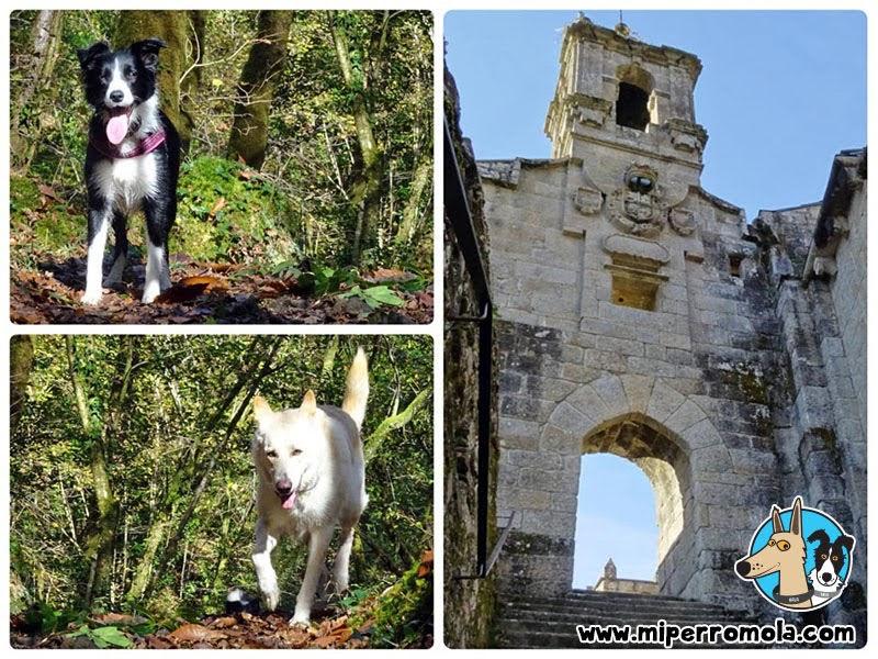 Can de Palleiro y Border Collie en la ruta al Monasterio de Caaveiro con Perros