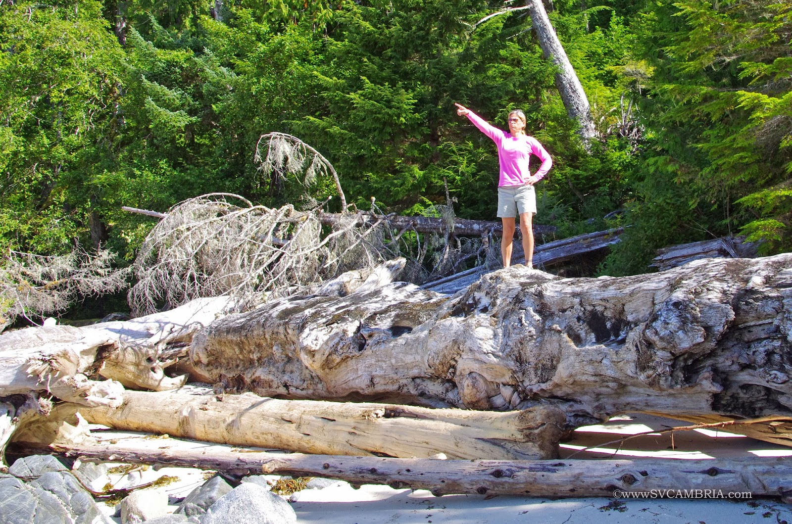 One of the many logs that have washed up on the beach at Fury Island.