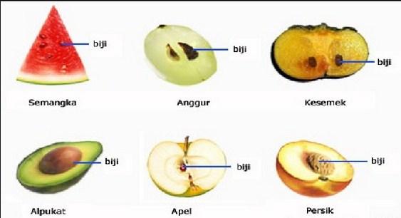 Pengertian Ciri dan Klasifikasi Tumbuhan Biji