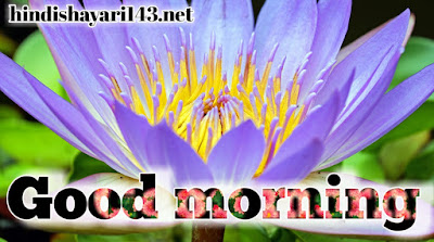 New flower good morning images with best designing