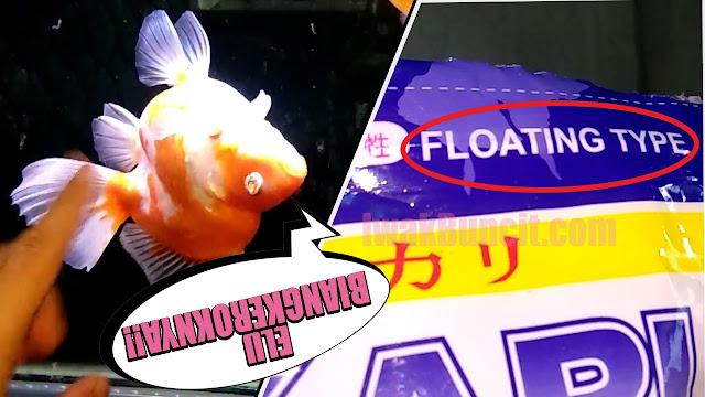 Pelet Tipe Floating Bikin Ikan Mas Koki Berenang Terbalik? Benarkah Seperti Itu? Baca Ini Dulu!