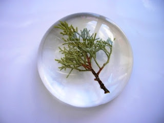 Custom made paperweight with a piece of fir tree