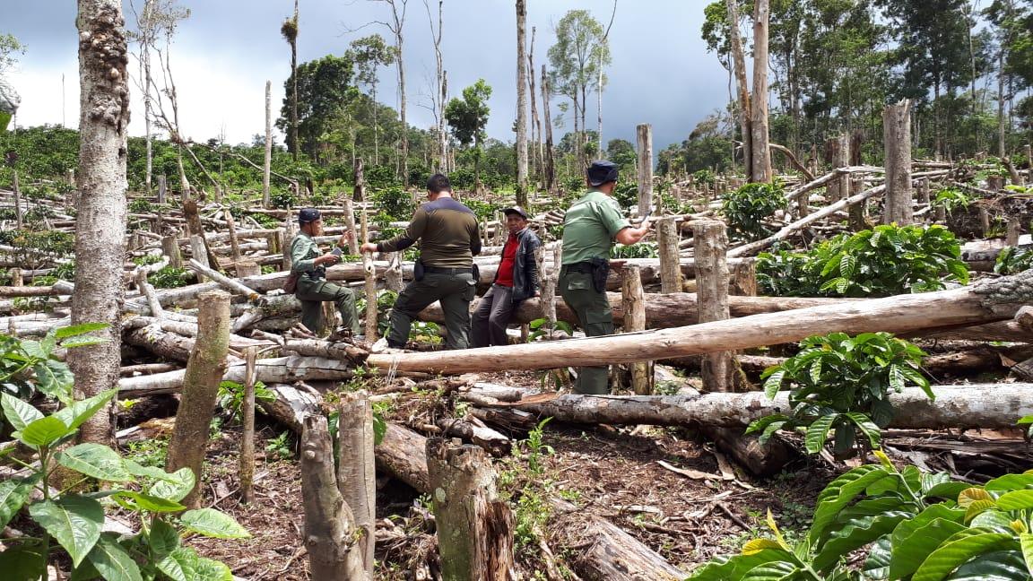 Pembalakan Liar, Dishut Lampung Cek TKP dan Pulbaket