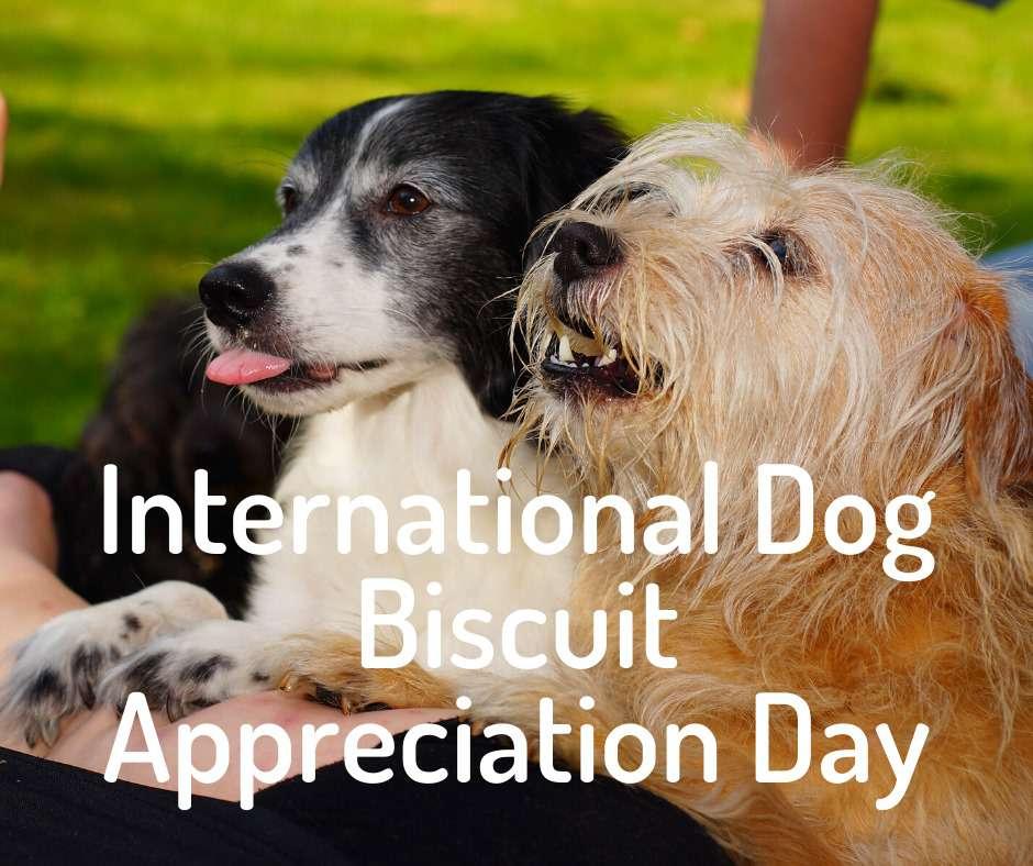 International Dog Biscuit Appreciation Day Wishes