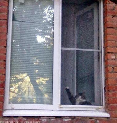 Lustige Katze sitzt am Fenster und macht Hitlergruß