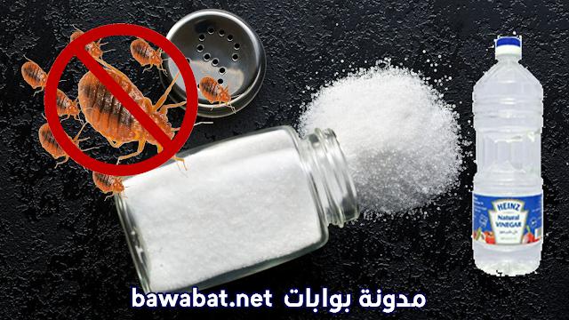 التخلص من البق بالخل و الملح
