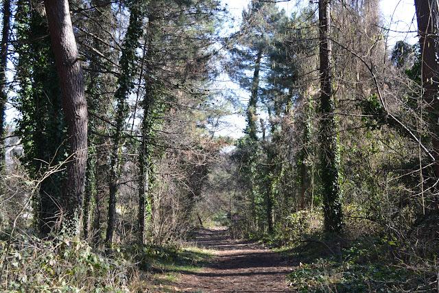 Ormanlık alan, Güral Sapanca Wellness Park, Sapanca