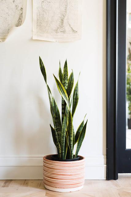Hydroponic Indoor Plants
