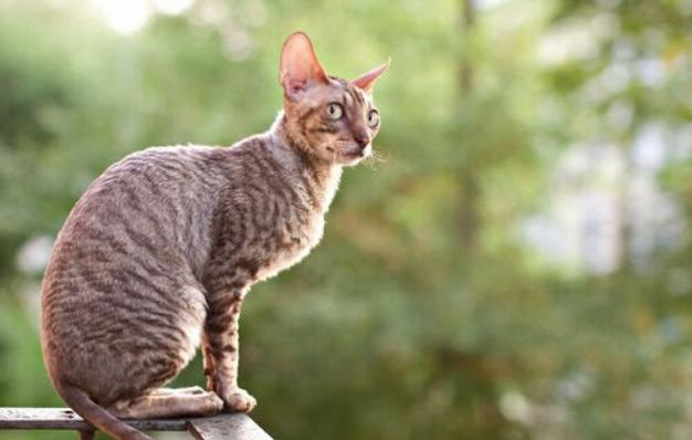 Comment aider un chat à prendre du poids ?