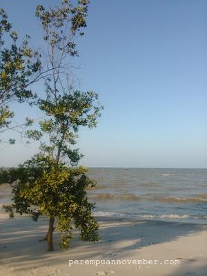mangrove beach