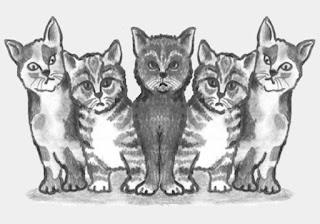 Giornata mondiale dedicata al gatto
