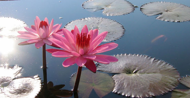 Plantas acuativas y botanica