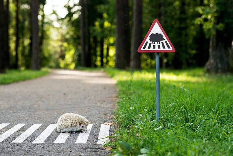 Señales de trafico pequeños recuerda a los residentes de ciudad que los animales además viven allí
