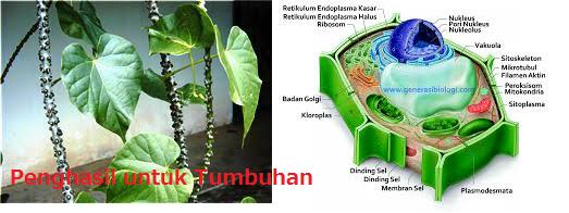 Metabolit Sekunder dan Struktur Penghasil untuk Tumbuhan