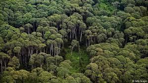Kegiatan Penyusunan Rencana Pengelolaan Hutan