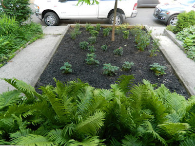 Toronto Leslieville Front Garden Weeding and Makeover After by Paul Jung Gardening Services--a Toronto Organic Gardener